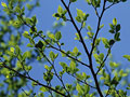 枝葉の写真