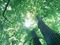 木漏れ日の写真