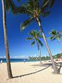 砂浜とヤシの木の写真