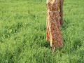 草原の女性の写真