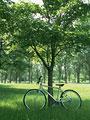 自転車と樹木の写真