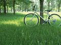 木陰の自転車の写真