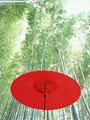 野点傘と竹林の写真
