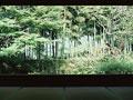竹林と庭の写真