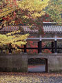 紅葉と回廊の写真