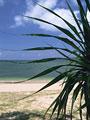 アダンの葉と海岸の写真
