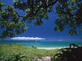 海岸と樹木の写真