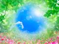 葉と青空の写真