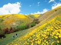 花畑の写真