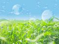 草原と地球儀の写真