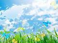 青空と草むらの写真