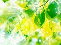 地球儀と葉の写真
