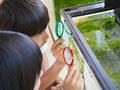 水槽の観察をする小学生の写真