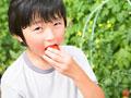 トマトを食べる小学生の写真