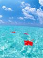 海に浮かぶハイビスカスの写真