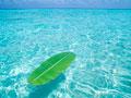 海に浮かぶバナナの葉の写真