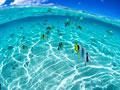 海中の魚の写真