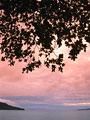 夕焼け空と樹木の写真