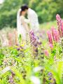 花畑でキスをする新郎新婦の写真