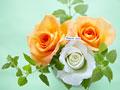 バラとメッセージの写真