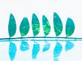 並んだ葉の写真