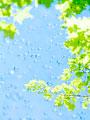 葉と水滴の写真