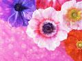 鮮やかな花のイメージの写真