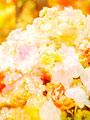 上品な花のイメージの写真