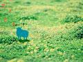 草原にいる羊のイメージの写真