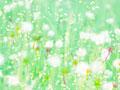 タンポポの綿毛イメージの写真
