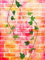 煉瓦に絡む蔦の写真