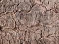 樹皮の写真