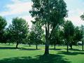 木立の写真