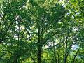 新緑の写真