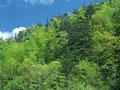 新緑の山の写真
