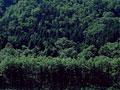 森林の写真