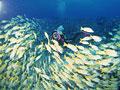 魚の群れの写真