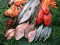 魚介いろいろの写真