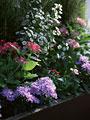 花壇の写真