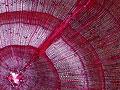 細胞の写真