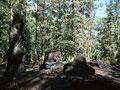 溶岩樹公園の写真