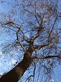樹木の写真