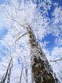 樹氷の写真