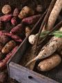 根菜類いろいろの写真