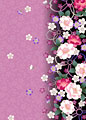 片寄せ桜の写真