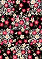 紅白桜の写真