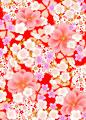 桜尽しの写真