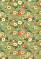 波菊の写真