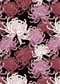 菊花の写真